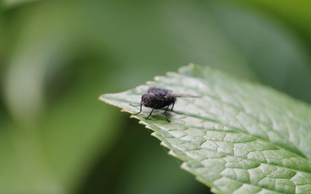 Insektenschutzgitter – Sonderformen möglich