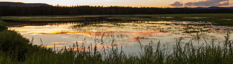 Mückenplage am See